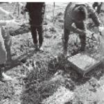 知的障害特別支援学校における農耕作業学習に関する考察